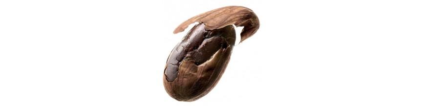 Kakao a RAW čokoláda
