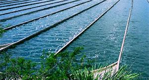 Chlorella, pestovateľské nádrže obr. 3