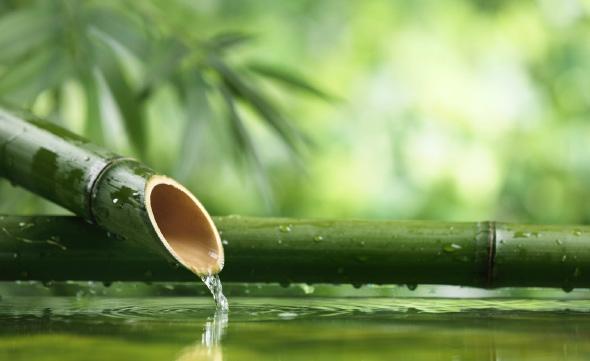 Bambus je najlepším zdrojom kremíka