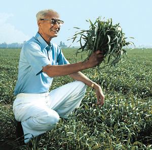Dr. Yoshihide Hagiwara a mladá jačmenná tráva