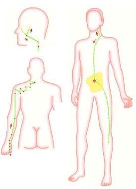 Meridián tenkého čreva