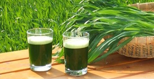 Zelený nápoj a mladé listy jačmeňa