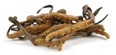Huba Cordyceps