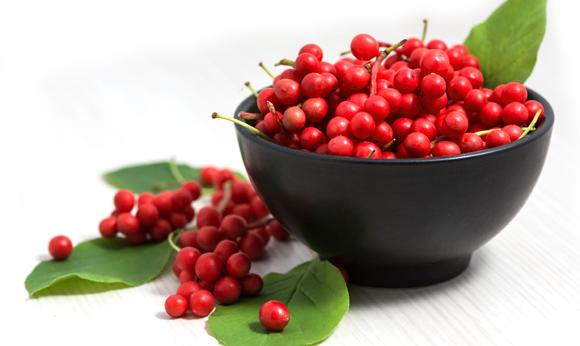Ovocné plody schisandry čínskej